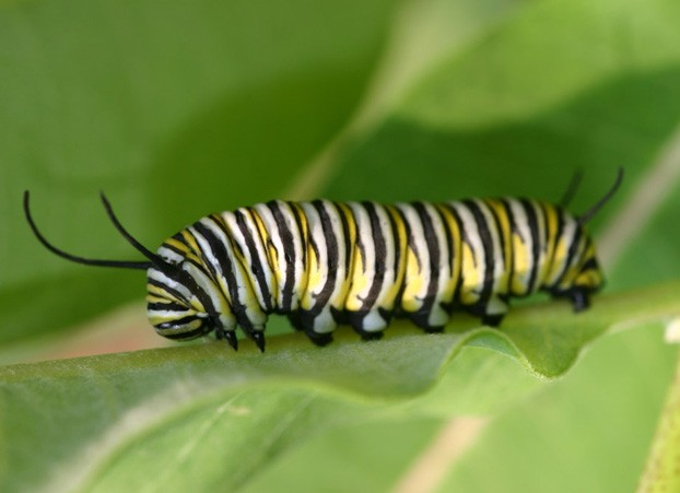 Caterpillar 15 photo - 2